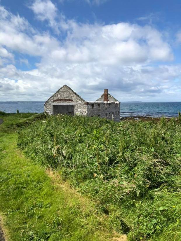 Kelp Home